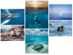 NATURE PHOTOGRAPHY NOTE CARDS SETS - WYNC-SET0803