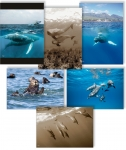 NATURE PHOTOGRAPHY NOTE CARDS SETS - WYNC-SET0804