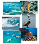 NATURE PHOTOGRAPHY NOTE CARDS SETS - WYNC-SET0805