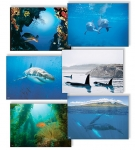 NATURE PHOTOGRAPHY NOTE CARDS SETS - WYNC-SET0815