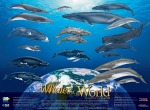 Poster, Whales of the World (19 X 26)